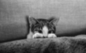 new_cat.png