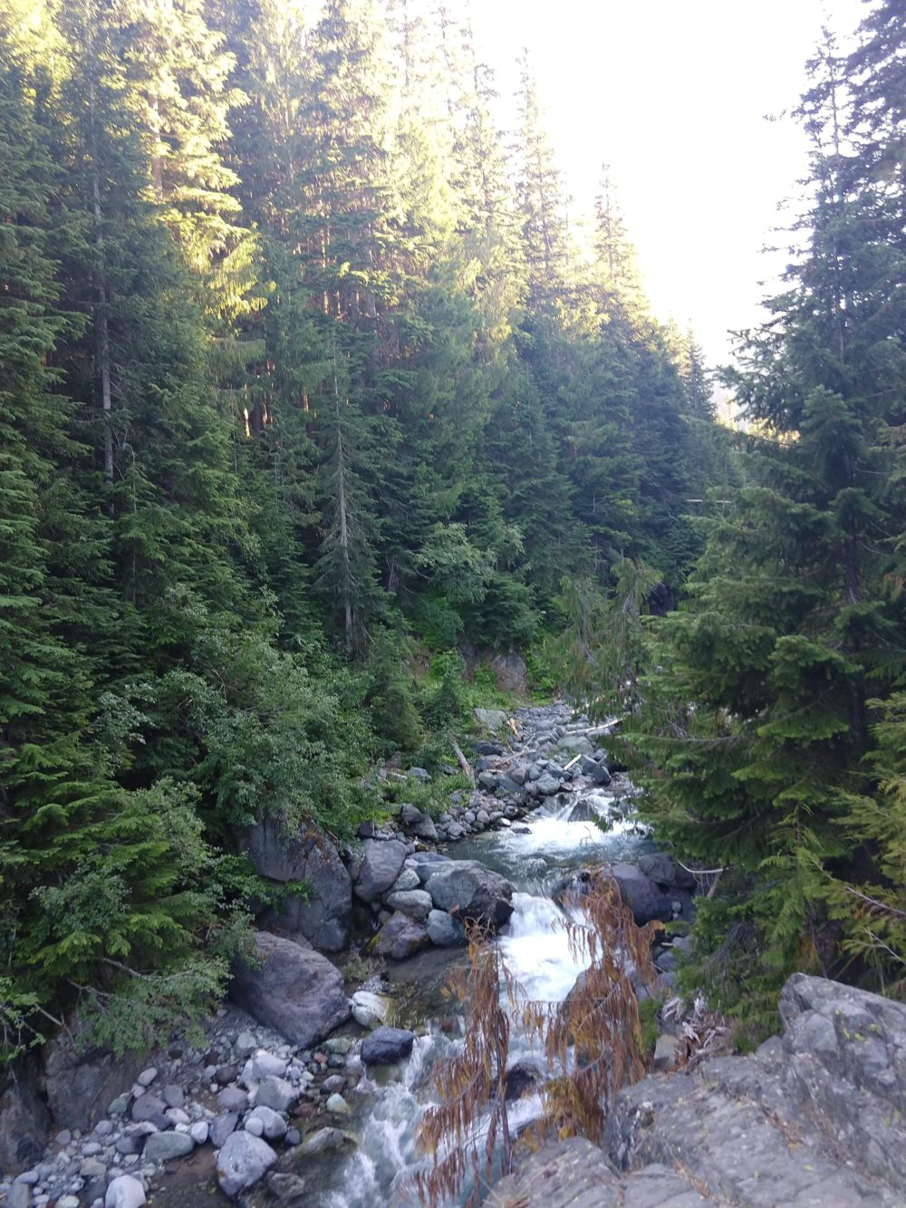 Pine trees and a waterfall in the foothills of Mount Rainier