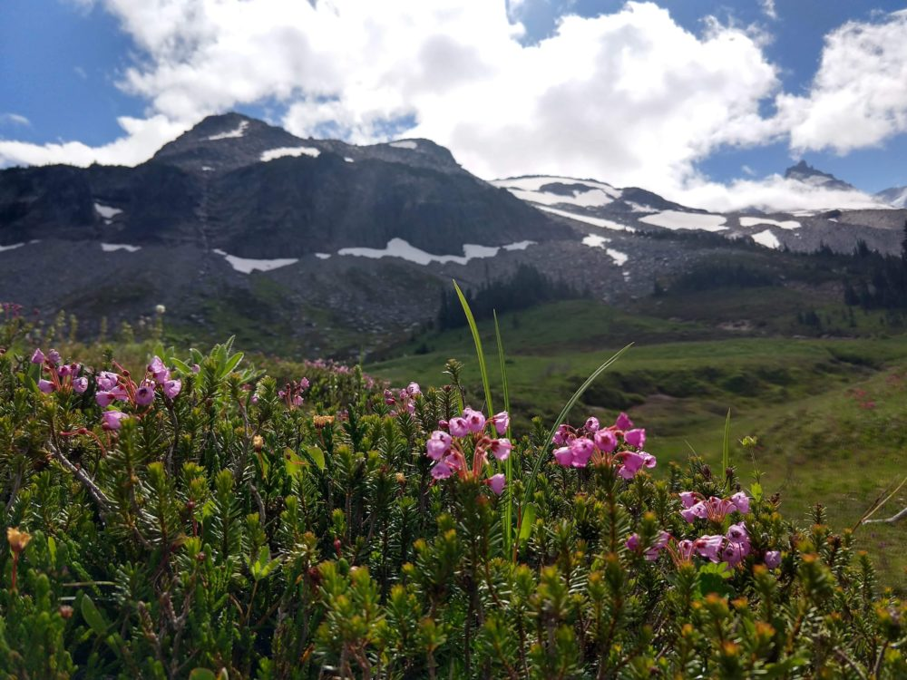 Pink flowers in the foreground, with rocky mountain peaks in the background
