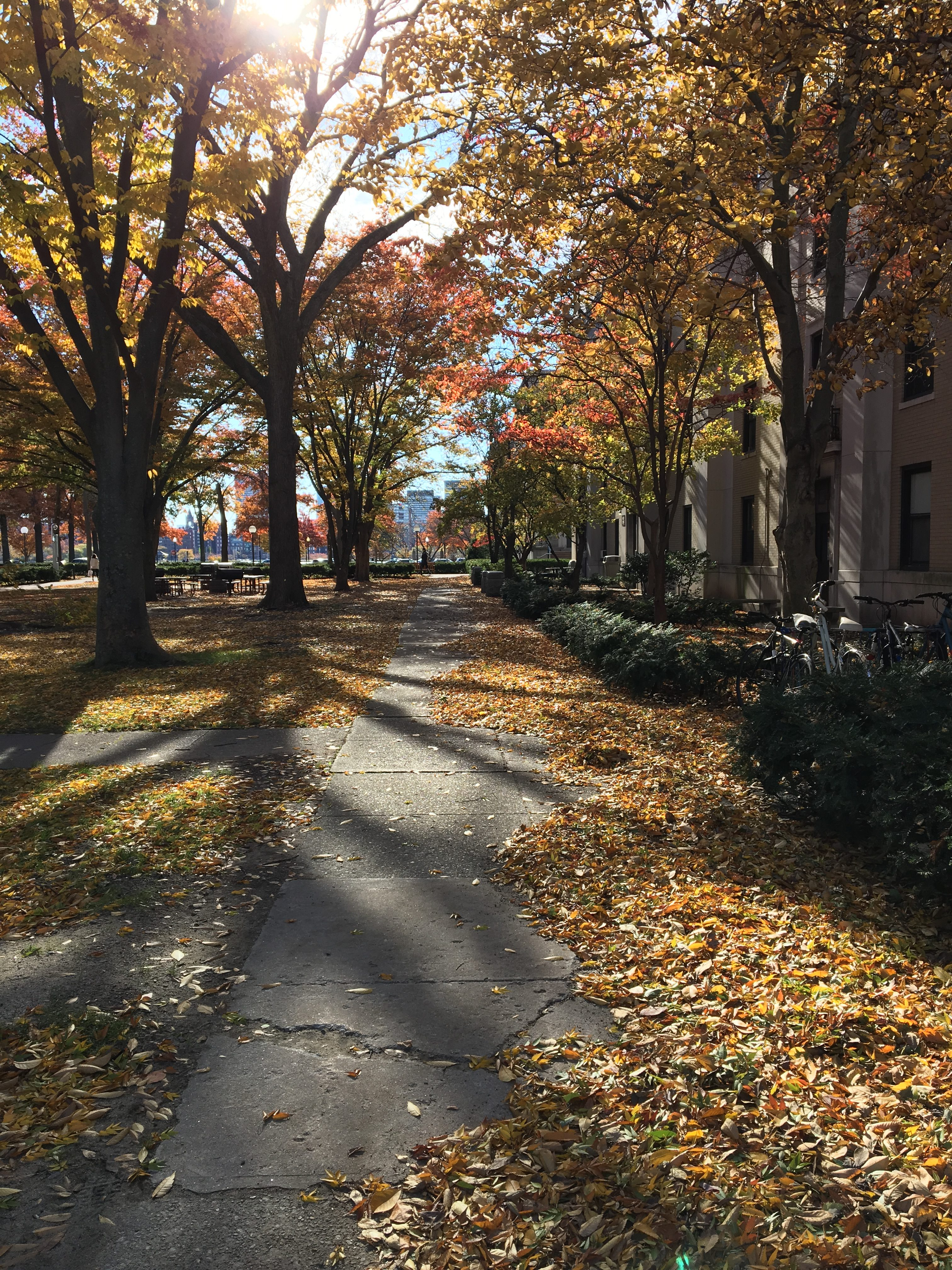 The middle of the East Campus courtyard. On either side of the path are bright leaves, and the sun can be seen shining through the mixed-colour trees.