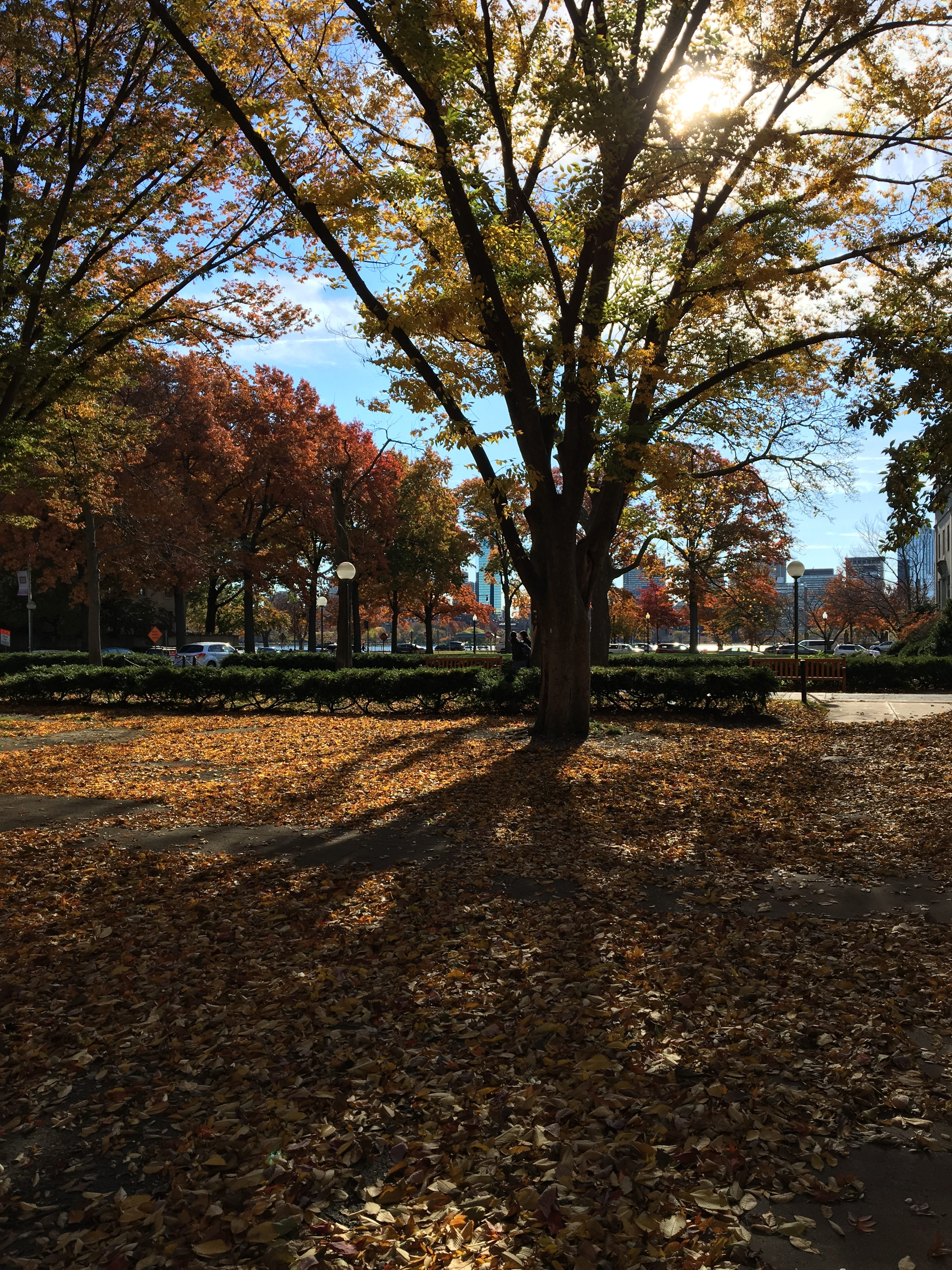 The edge of East Campus courtyard. The foreground is covered entirely in orange leaves, with yellow and orange trees behind.