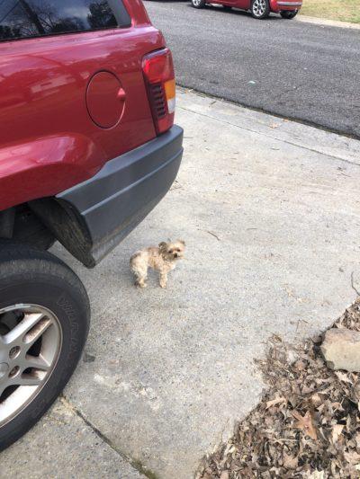 my dog chewey next to a car
