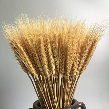 a bundle of dried wheat