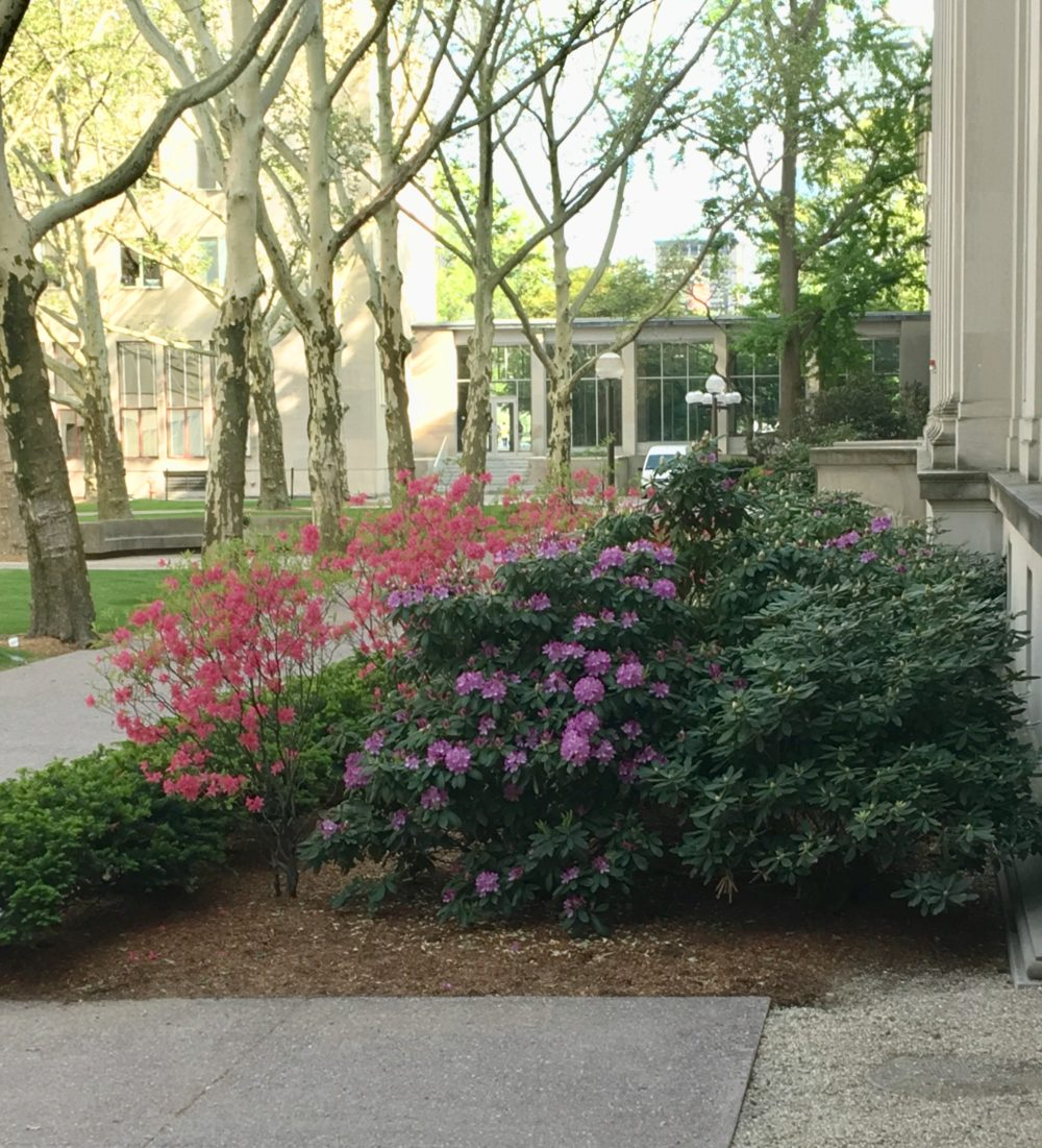 Two flowering bushes in front of Building 8. One is bright pink and the other is lilac.
