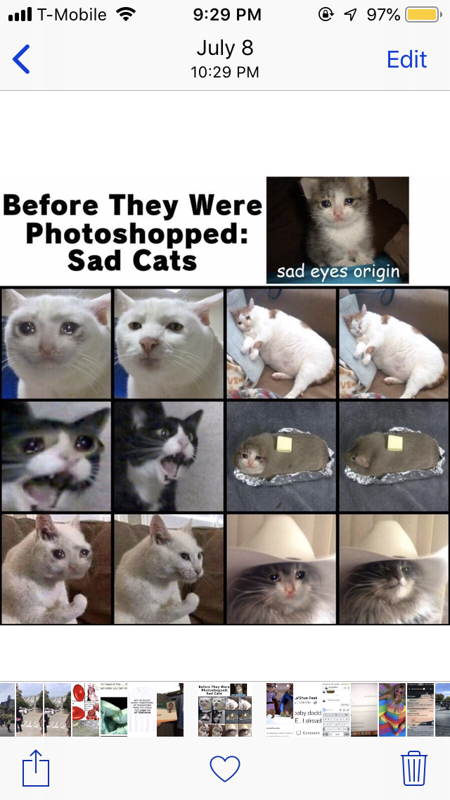 a chart showing what cat pictures originally looked like before they were photoshopped into the sad cat meme