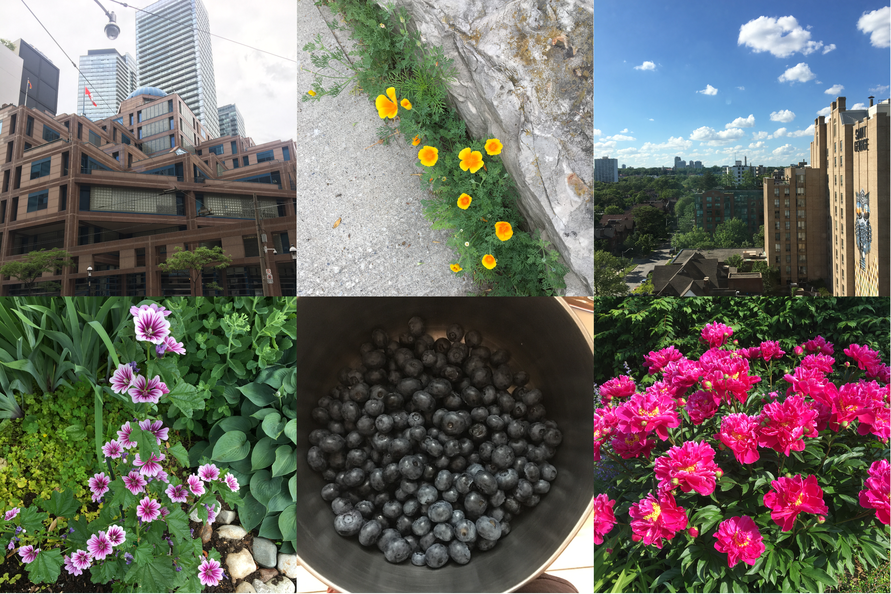 A collage of six images. Two show buildings I see often and like; three are brightly-coloured flowers; one is a bowl full of blueberries.