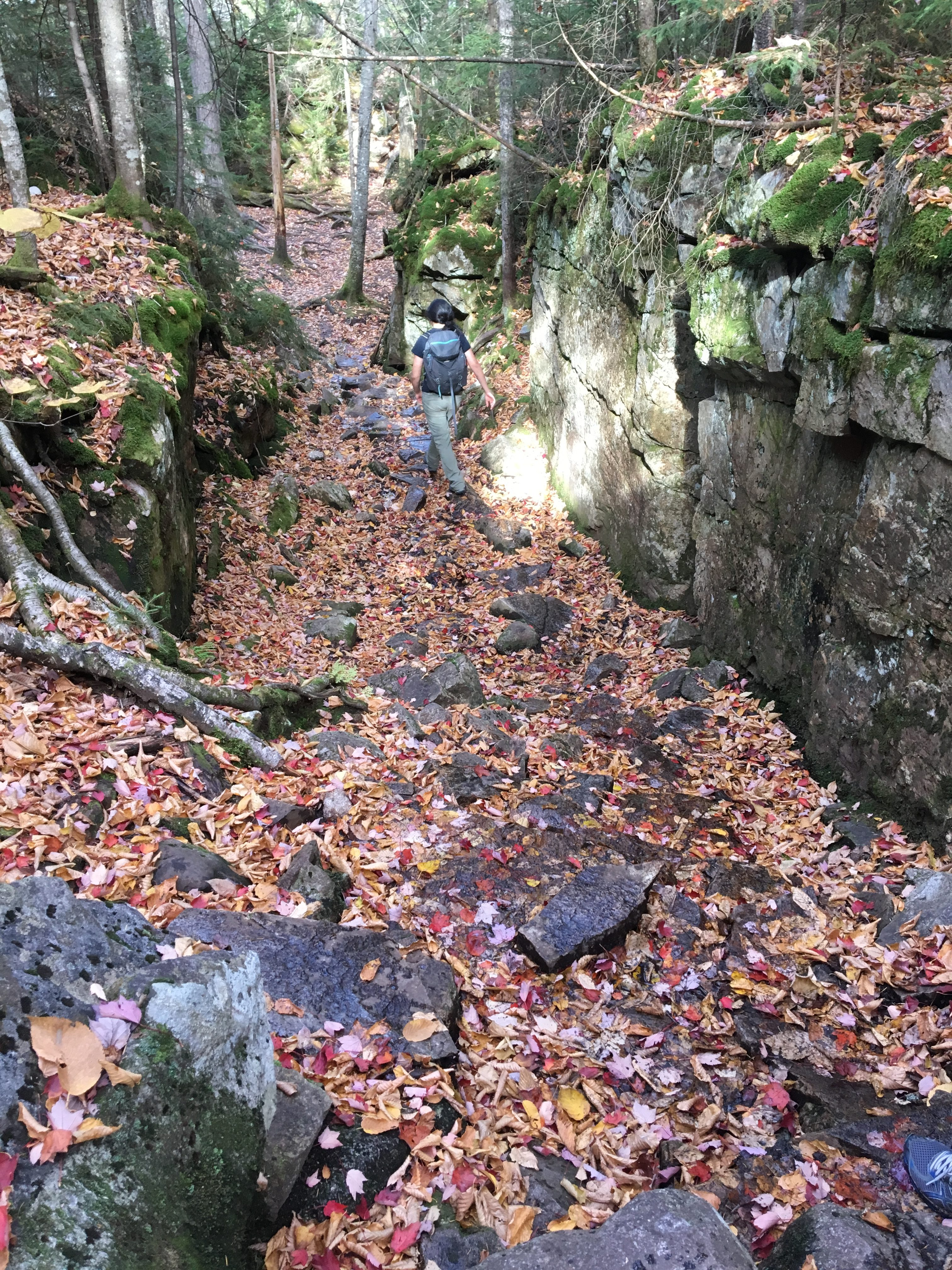 What used to be a stream: a large hollow between two rocky cliffs. It is dotted with some rocks, but mostly is full of red leaves.