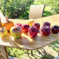a table full of apples labeled with their variety name, including a small pumpkin labeled…