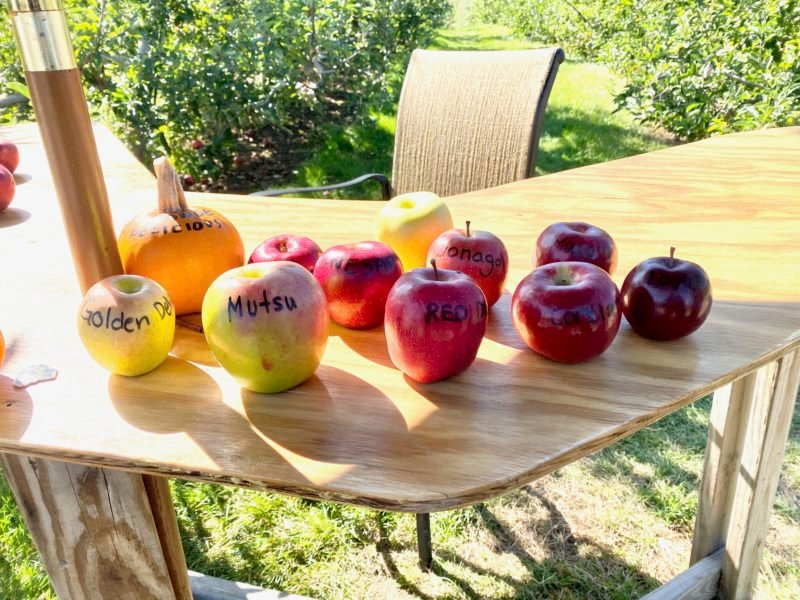a table full of apples labeled with their variety name, including a small pumpkin labeled orange delicious