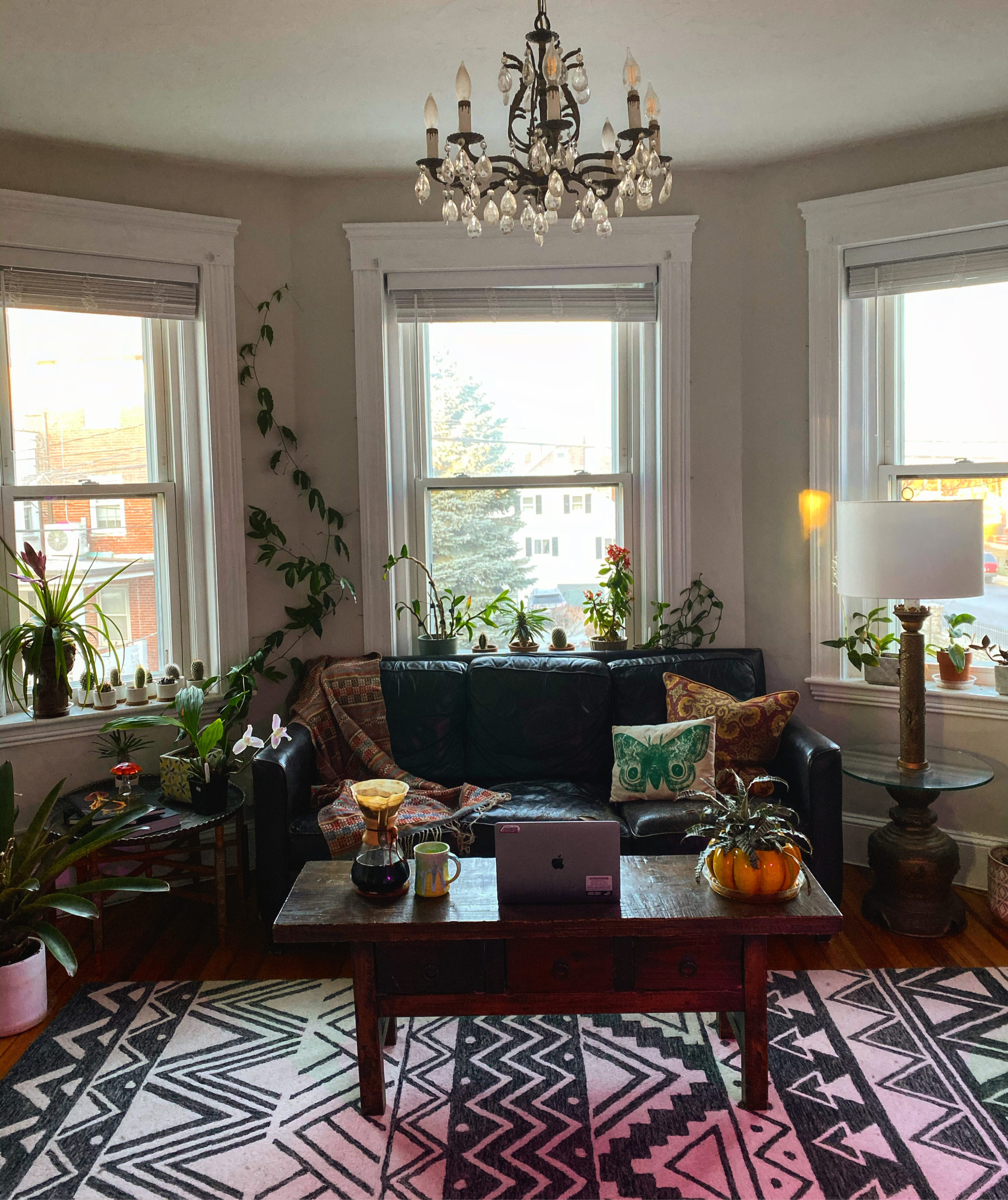 Tim's apartment with bay windows, a patterned rug, and tons of plants