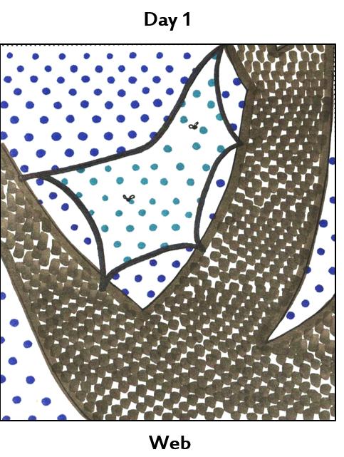a web in a tree