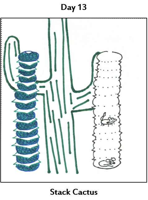 a stack of pocket discs next to a saguaro cactus