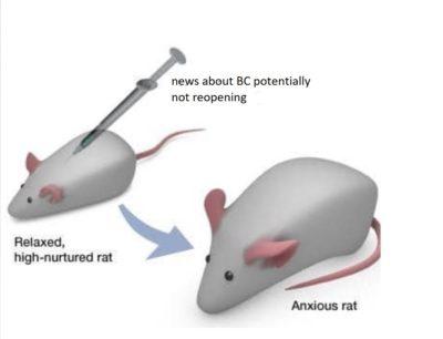 bc renovations rat