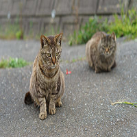 resized image of two cats where the cats look squished
