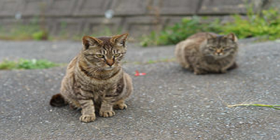 resized image of two cats where both cats are stretched