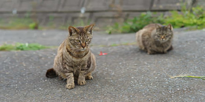 resized image of two cats where the cats look normal