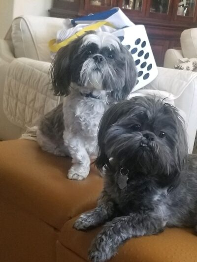 two dogs coco and louie