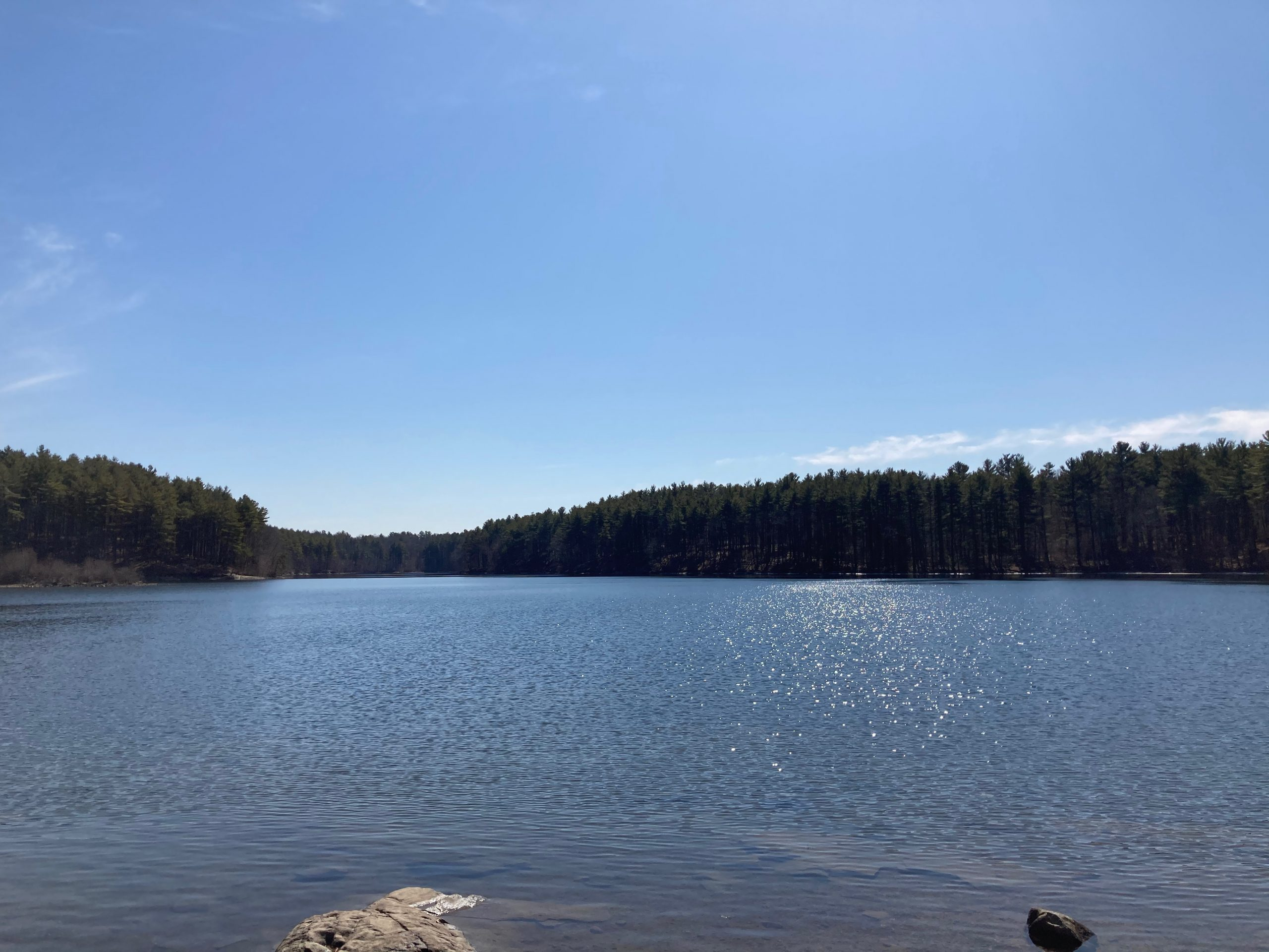 A calm blue lake and a cloudless blue sky. Pine trees cover the horizon.