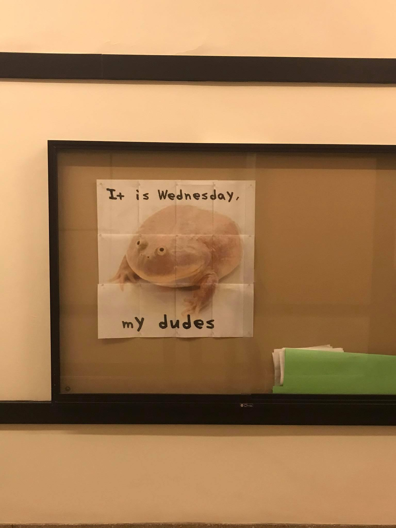 the wednesday frog meme on a bulletin board in the infinite corridor